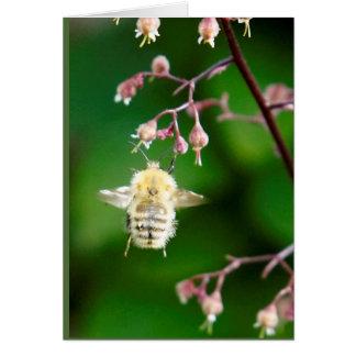 Howgillhounds carda la abeja felicitación