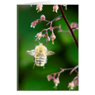 Howgillhounds carda la abeja tarjeta pequeña