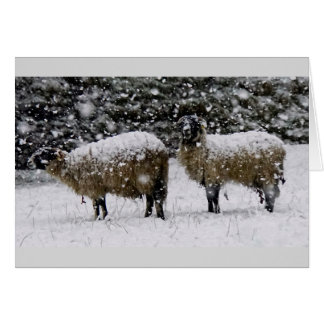 Howgillhounds dos ovejas en nieve tarjeta de felicitación
