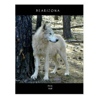 http://bearizona.com/Animals-Tour/Arctic-Wolf Postal