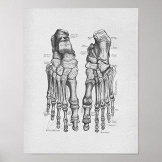 Huesos de pie del ejemplo de la anatomía del póster