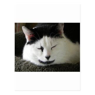 Humor blanco y negro del gato postal