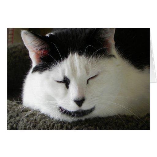 Humor blanco y negro del gato tarjeton