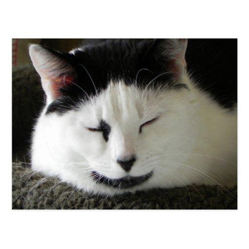 Humor blanco y negro del gato tarjetas postales