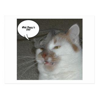 Humor de la despedida de soltero tarjetas postales