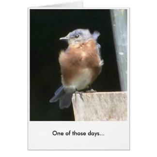 Humor del Bluebird - tarjeta de felicitación
