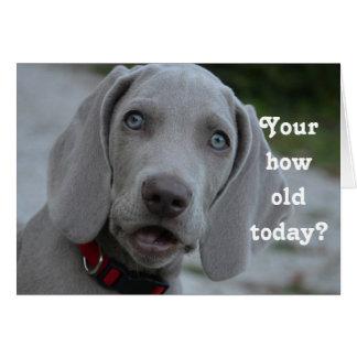Humor del perro del feliz cumpleaños tarjeta de felicitación