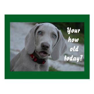 Humor del perro del feliz cumpleaños postal