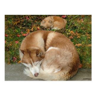 Husky siberiano y perro de Pomerania Pomeranian de Postal