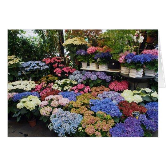 Hydrangeas, mercado de la flor de París, Francia Tarjeta De Felicitación