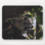 Hyrax de Bush Alfombrillas De Ratón