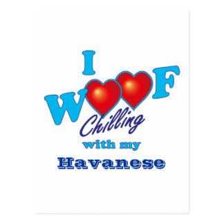 I tejido Havanese Postal