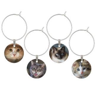Identificador De Copa Cuatro caras del gato y del gatito