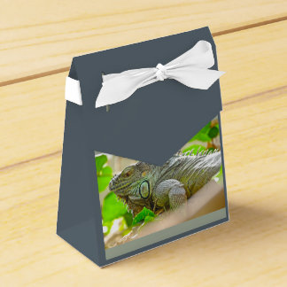 Iguana Caja Para Regalos
