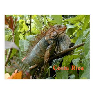 Iguana Costa Rica de la postal