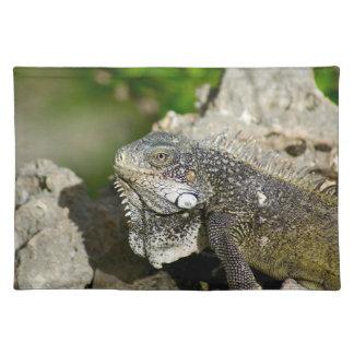Iguana, Curaçao, islas caribeñas, foto Salvamanteles