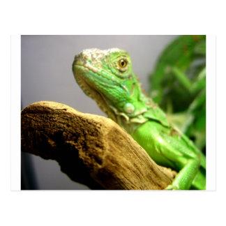 Iguana del bebé postal