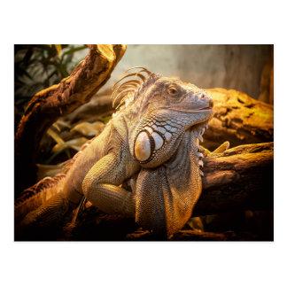 Iguana del dragón postal