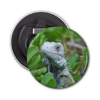 Iguana del peekaboo abrebotellas redondo