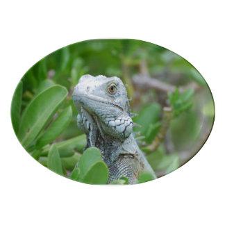 Iguana del peekaboo bandeja de porcelana
