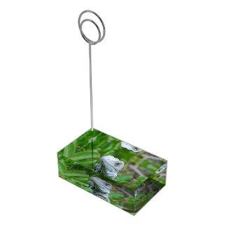 Iguana del peekaboo soportes de tarjeta de mesa