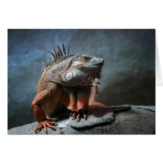 Iguana Tarjeta