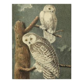 Ilustraciones del ilustracion del arte del pájaro
