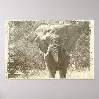 imagen animal del arte pop del elefante