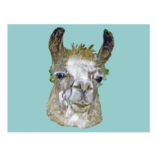 Imagen de la llama tarjetas postales