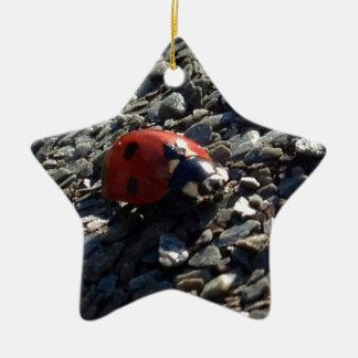 Imagen de la mariquita adorno de cerámica en forma de estrella