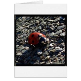 Imagen de la mariquita tarjeta de felicitación