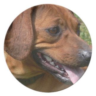 Imagen de una placa del perro del Dachshund Plato Para Fiesta