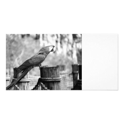 imagen del animal del bw del pájaro del macaw tarjetas personales