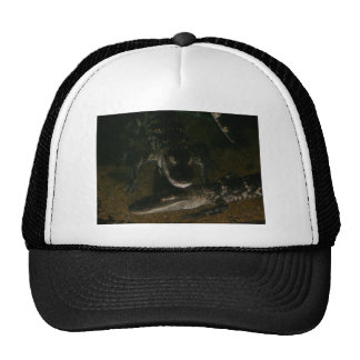 Imagen del cocodrilo en el gorra