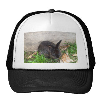 Imagen del conejito gorras