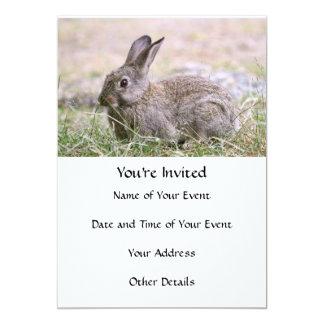 Imagen del conejo anuncios personalizados