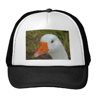 Imagen del ganso gorras
