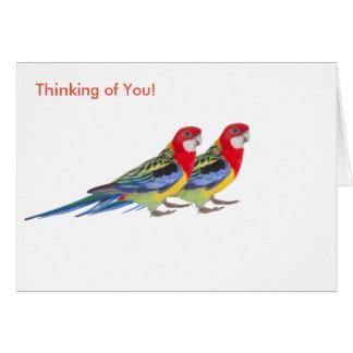 Imagen del loro para la tarjeta de felicitación
