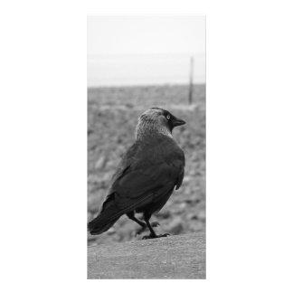 Imagen del pájaro. Grajo Lonas Publicitarias
