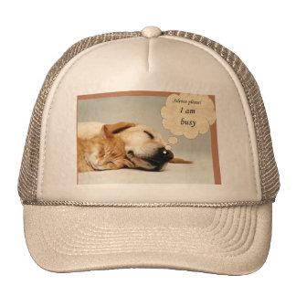 Imagen del perro gorras