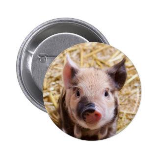 Imagen linda de un cerdo del bebé chapa redonda de 5 cm