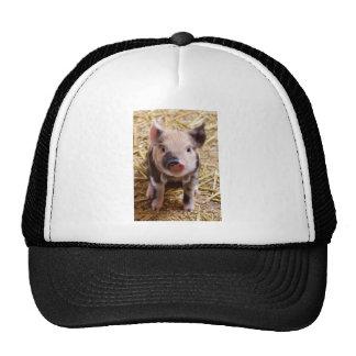 Imagen linda de un cerdo del bebé gorro de camionero
