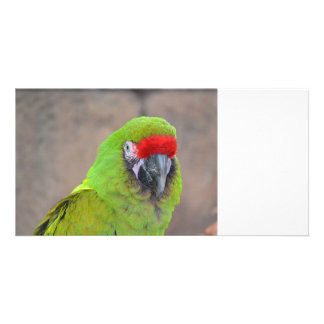 Imagen principal roja c del pájaro del loro verde tarjetas fotográficas personalizadas