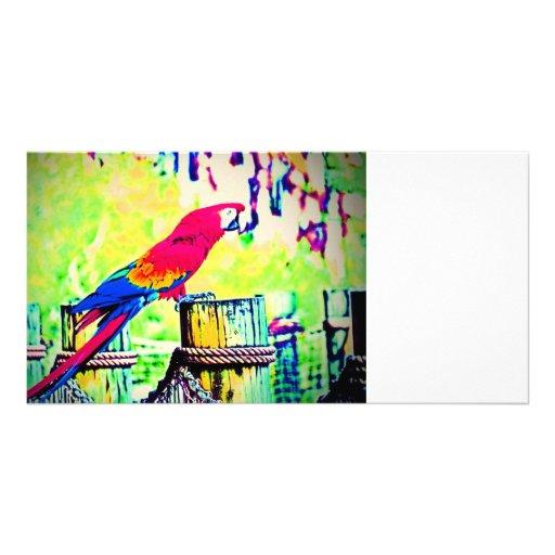 imagen saturada hdr del pájaro del macaw vignetted tarjeta personal con foto