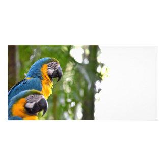imagen trasera c.jpg del pájaro del foco de dos ma tarjetas fotográficas