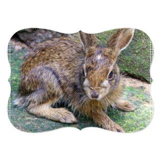 Imágenes del conejo invitación 12,7 x 17,8 cm