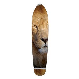 Imágenes del león patín personalizado
