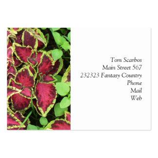 imágenes preciosas 05 del jardín tarjeta de visita