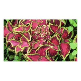 imágenes preciosas 05 del jardín plantillas de tarjetas de visita