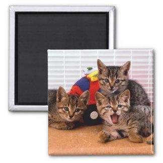 Imán 3 gatitos